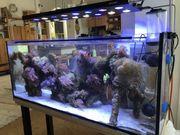 komplettes Salzwasseraquarium