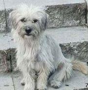BELLA-LISIMA - kleines fröhliches Hundemädchen verschmust