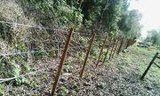 10 Hektar Land mit Wald