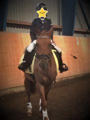 Pony in Sonderlackierung