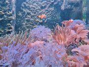 Meerwasseraquarium Anfängergeeignet