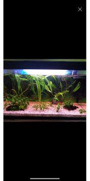 126l Aquarium