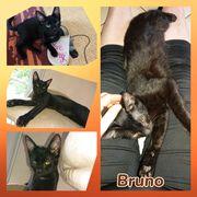 Wunderschöner Kater Bruno geimpft gechipt