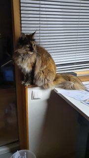 Katze zugelaufen bitte melden