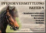 Pferdevermittlung Bayern