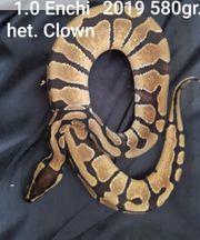 Enchi het Clown 1 0