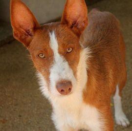 Hunde - Ungeschliffener Diamant Coto