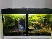 Aquarium Komplett 60x30x30