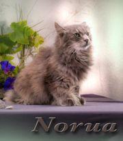 Robin und Norua ein liebenswertes