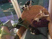 4 süße kleine Babykatzen zu