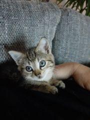 Dringend Kitten gesucht