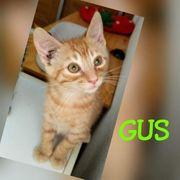 Gus - auf der Suche nach