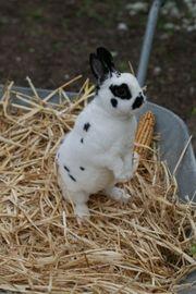 Süße Kaninchen suchen neues Zuhause -