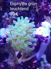 Meerwasser Auflösung korallen Schnecken Riffkeramik