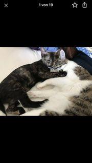 Bella und Nairobi suchen ein