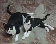 Yasmina 3 Jahre Kitten 6