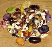Bohnen und anderes-Samen historischer und