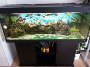 Schwarze Juwel-Aquarium-Kombination 400l komplett