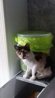 Süsse kleine Katze
