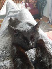 2 Jahre alte Katze in