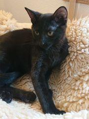 Lilli - Katzenwelpe aus dem Tierschutz
