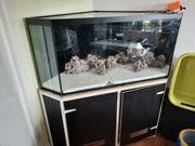 550 liter eckaquarium
