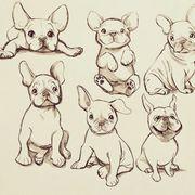 SUCHE Französische Bulldogge Hündin