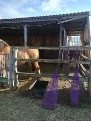 Pferdeboxen mit Auslauf und Offenstallboxe