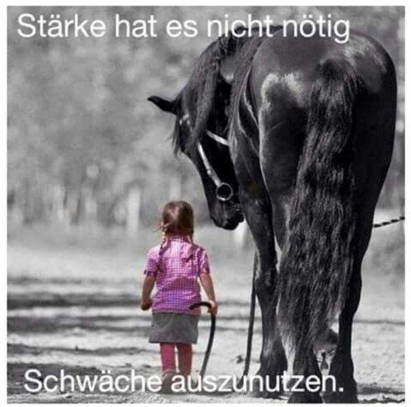 Zeit mit Pferden