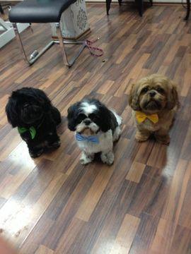 Tierbetreuung - Tierbetreuung von Hunde Katze Vogel