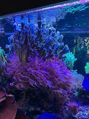 Korallen in allen Größen