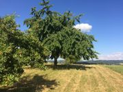 Freizeitgrundstück mit Obstbaumbestand in Traumlage