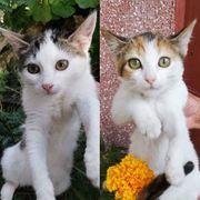 Kätzchen Angela und Ivy möchten
