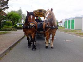 Bild 4 - Schönes Gespann Arbeitspferde - Buttstädt