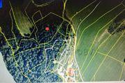 Wald Forst ca 1 135ha