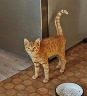 Unser hübsches Katzenmädchen Fudge sucht