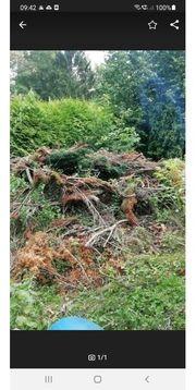 Günstige Entsorgung von Gartenabfall Grünschnitt