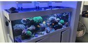 Meerwasser Aquarium 650 Liter Ohne