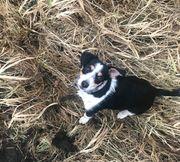 Jack-Russel Terrier Mix sucht neues