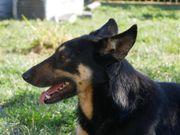 Amy - ein toller Familienhund
