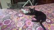 Miky und Alexa die Unzertrennlichen