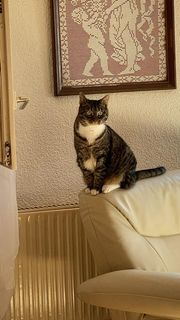 Notfall - Katze sucht neuen Wirkungskreis