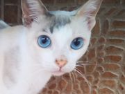 OCEAN - Augen blau wie das