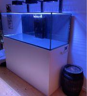 Meerwasser Aquarium Reefer 525 XL