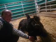 Pflegebeteiligung an Esel Wallach