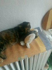 Dringend kastrierte Katze zur ab