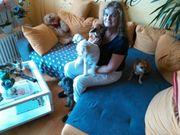 Familiäre Hundebetreuung