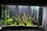 Aquarium - Auflösung Schmerlen Guppys Welse