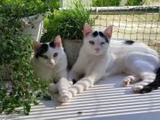 süße Katzenkinder Leo Mimi und