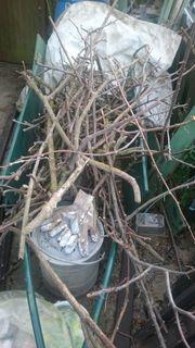 Baum holz